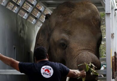 'World's loneliest elephant' Kaavan arrives at new sanctuary